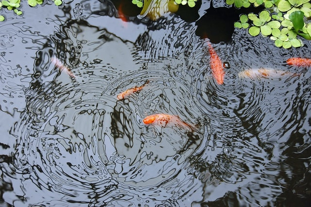 What Does Annual Pond Maintenance Involve?