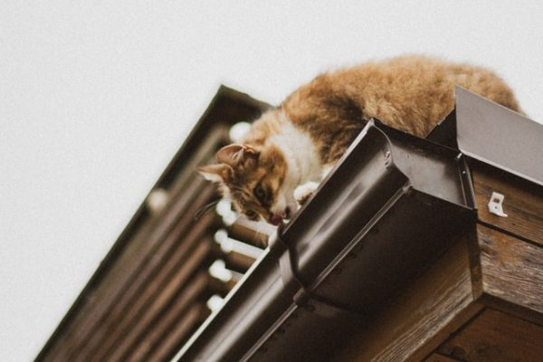 The Top Signs You Need New Gutters